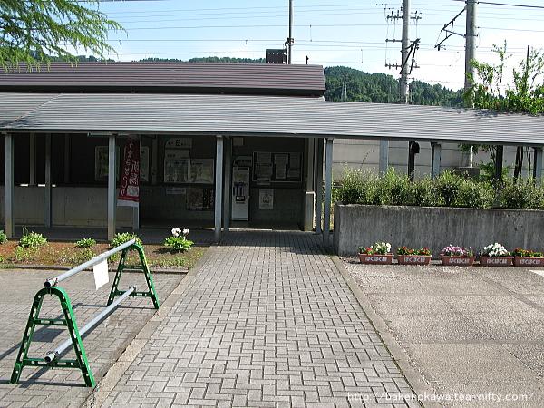 Mushikawaosugi1030612