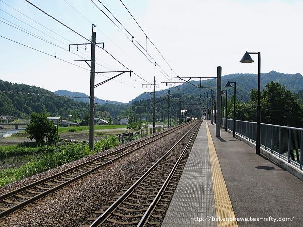 Mushikawaosugi1070612
