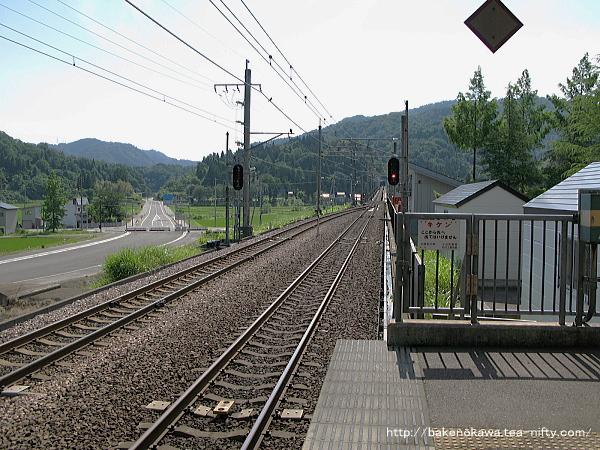 Mushikawaosugi1110612