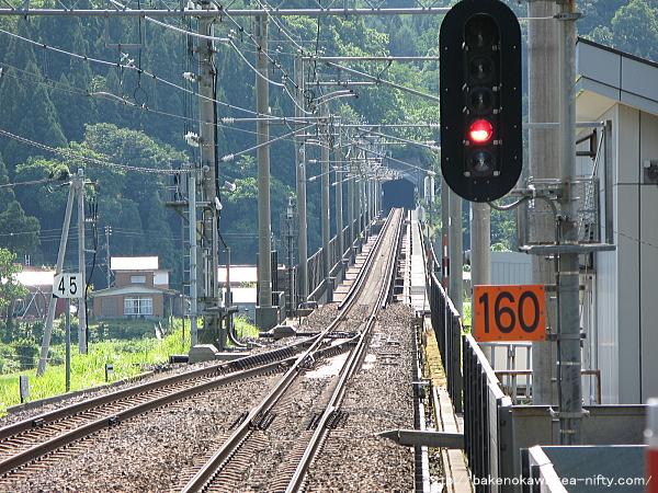 Mushikawaosugi1120612