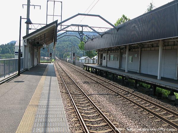 Mushikawaosugi1140612