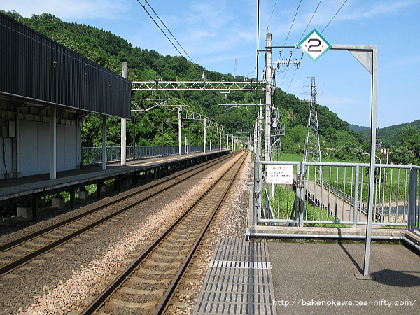 Mushikawaosugi1150612