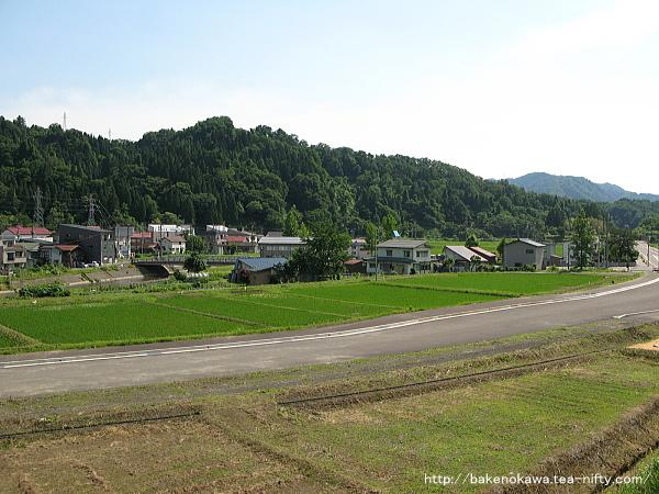 Mushikawaosugi1160612