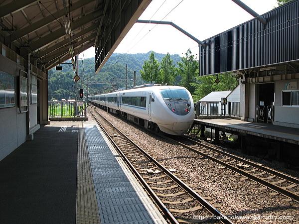 Mushikawaosugi1220612