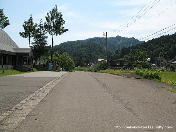 Mushikawaosugi1230612