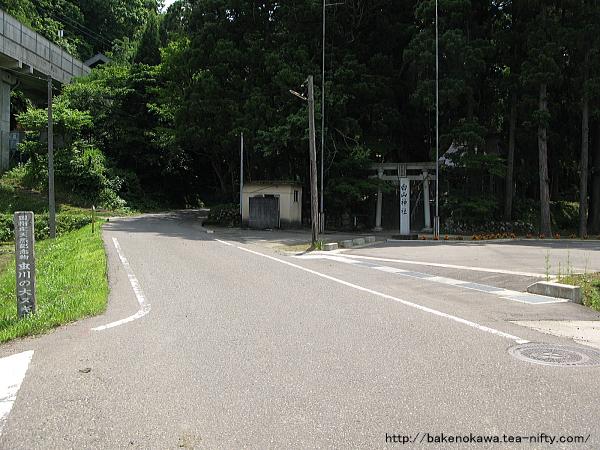 Mushikawaosugi1260612