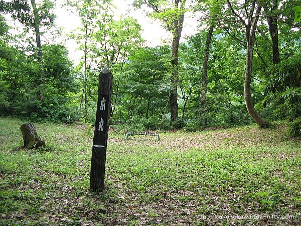Mushikawaosugi1330612