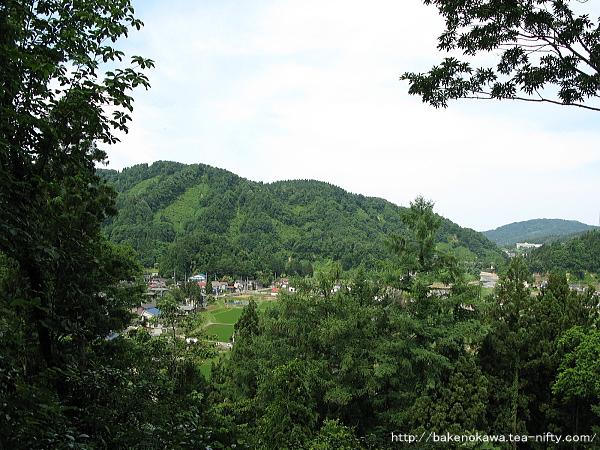 Mushikawaosugi1340612