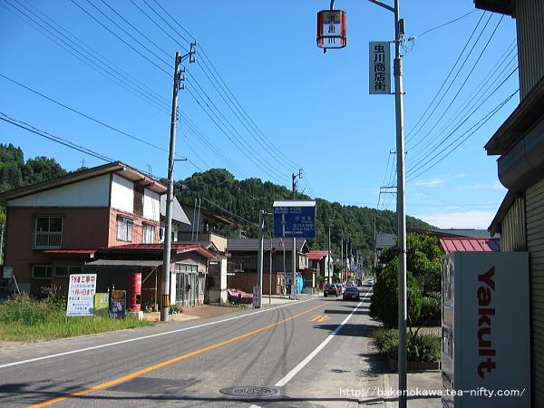 Mushikawaosugi1360906