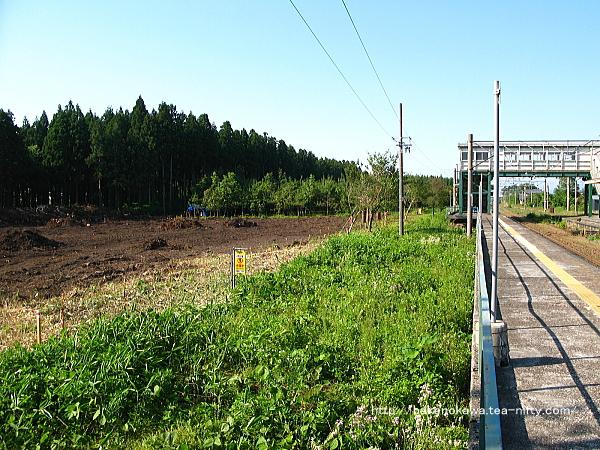 平木田駅裏の伐採された防風林その1