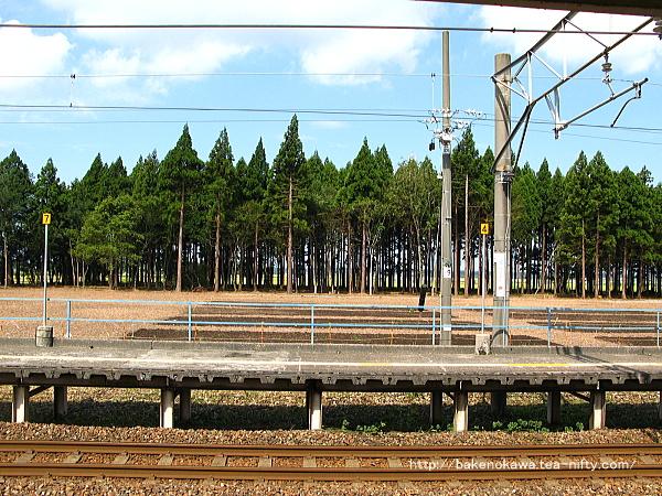 平木田駅裏の伐採された防風林その3