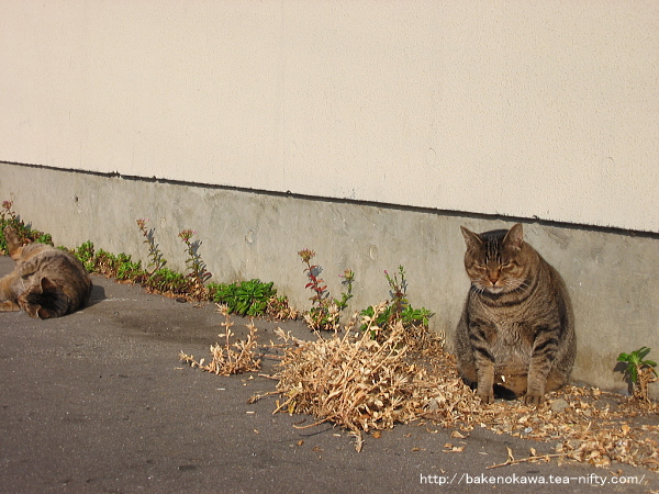 駅前にいた二匹の猫