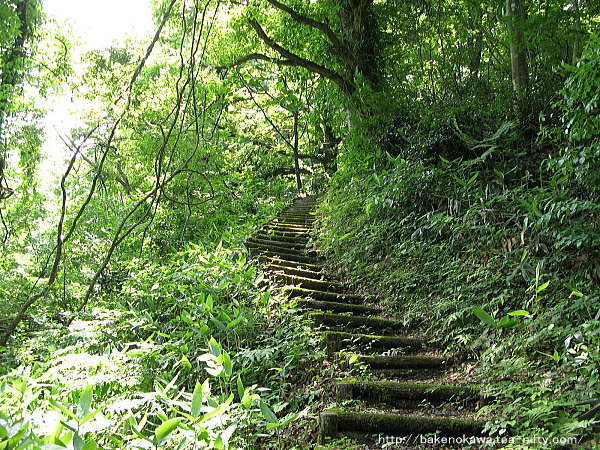 城跡への登り道その2
