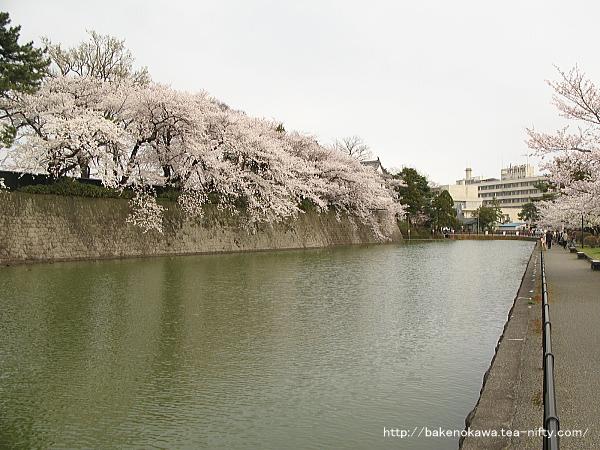 新発田城の石垣と堀と満開の桜