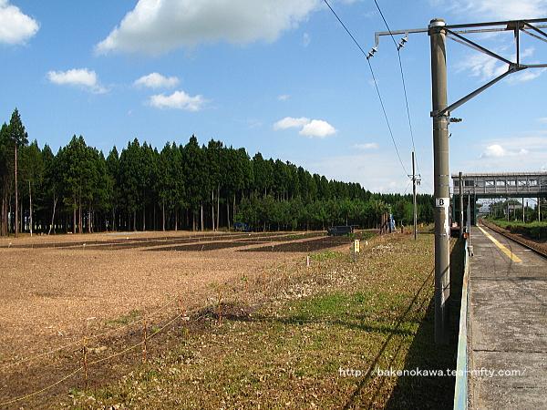 平木田駅裏の伐採された防風林その4